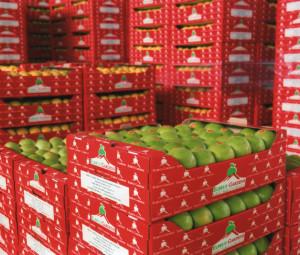 фруктохранилище